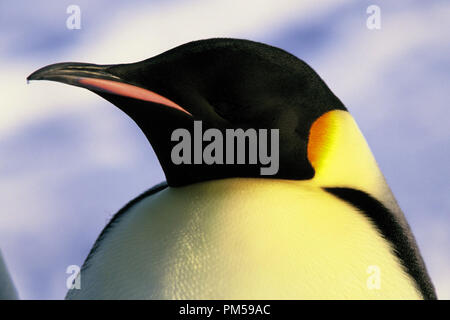 Film Still / Publicity Still from 'March of the Penguins' 2005 © 2005 National Geographic  File Reference # 30736224THA  For Editorial Use Only -  All Rights Reserved