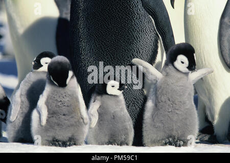 Film Still / Publicity Still from 'March of the Penguins' 2005 © 2005 National Geographic  File Reference # 30736228THA  For Editorial Use Only -  All Rights Reserved