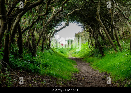 The footpath through the hedges between St David's and St Non's, St David's, Pembrokeshire, Wales - Stock Photo