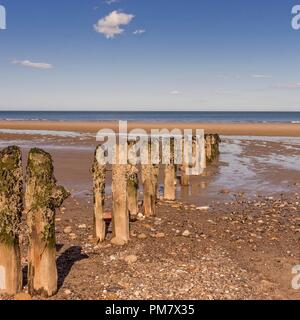 Old and barnacle crusted breakwater posts on a pebble strewn beach reach down towards the sea. A blue sky with clouds is above. - Stock Photo