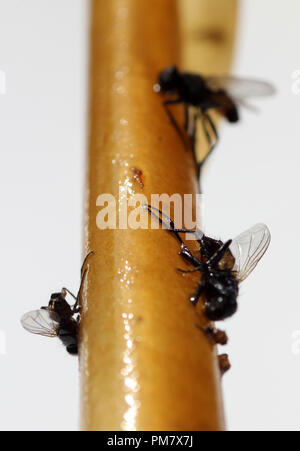 flypaper - Stock Photo