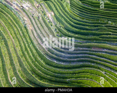Longji Terraced Rice Fields means Dragon's Backbone (Longji). The rice terraces resemble a dragon's scales, while the peaks of the mountain range rese - Stock Photo