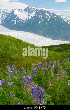 Spencer Glacier Bench, Chugach National Forest, Alaska. - Stock Photo