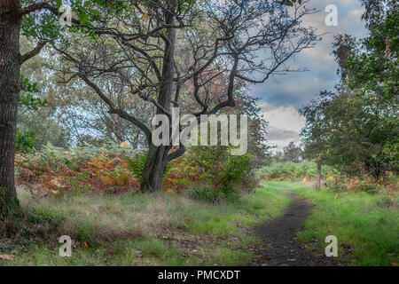 A tree in Calderwood Country Park. - Stock Photo