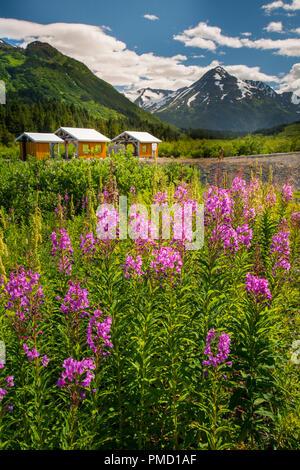 Alaska Railroad Glacier Discovery train trip,  Chugach National Forest, Alaska. - Stock Photo