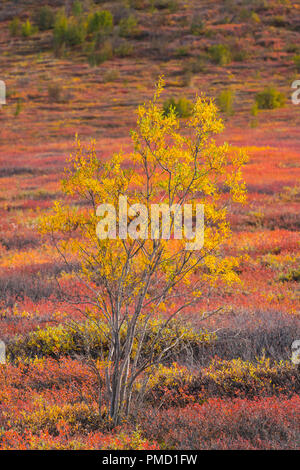 Autumn colors in the Brooks Range, Arctic Alaska. Stock Photo