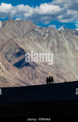 Silhouette of camels in the sands of Nubra valley region of India - Stock Photo