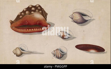 vintage shells - Stock Photo