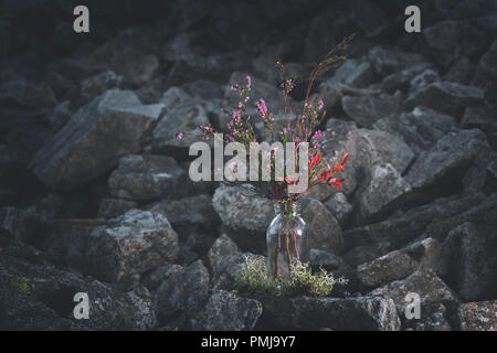 Freshly picked branches of wild blueberries and blossom heather in glass bottle on scenic rocky background of British upland in Shropshire Hills,UK - Stock Photo