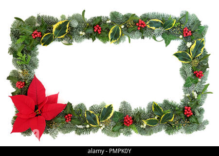 Poinsettia flower border with snow covered spruce fir, holly, ivy and mistletoe isolated on white background. Thanksgiving and Christmas theme. - Stock Photo