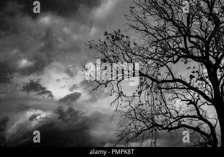 Silhouette dead tree  on dark dramatic sky background for scary or death. Halloween night. Hopeless, despair, and lament concept. Creepy and spooky sc