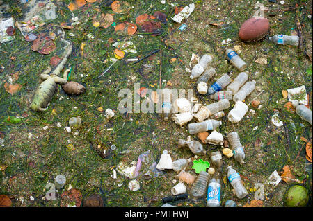 MIAMI, USA - CIRCA AUGUST, 2018: Plastic, styrofoam and trash pollution floating with seaweed and a dead iguana in the marina. - Stock Photo