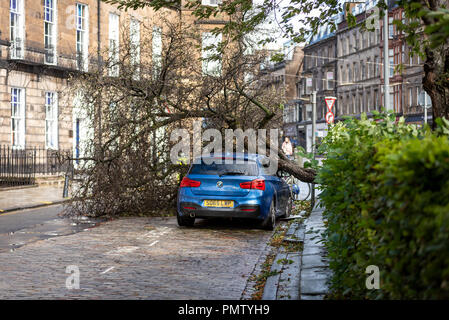 Edinburgh, UK. 19 September 2018. Storm Ali arrives in Edinburgh, Scotland, with winds in excess of 60mph causing damage to property and disruption to travel and businesses. This car was crushed by a falling tree in Coates Crescent in the city centre. Credit: Andy Catlin/Alamy Live News - Stock Photo