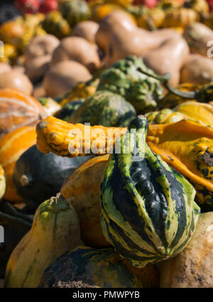 Numerous pumpkin varieties in various colors and shapes with blurred - Stock Photo