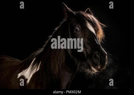 Portrait wide-eyed horse on black background - Stock Photo