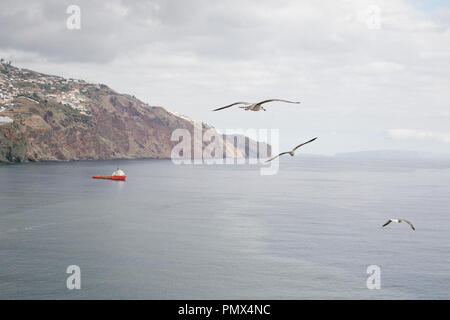 Sea birds (seagulls) flying high up over a calm blue sea with a boat below and the coastline in the background - Stock Photo