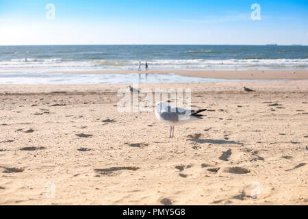 Empty beach at sunset. Yellow sand and sea. Romantic view. - Stock Photo