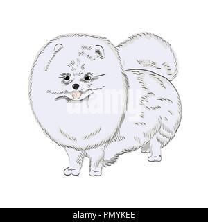 White pomeranian dog hand drawn illustration. Cute white dog sketch isolated on white background. - Stock Photo