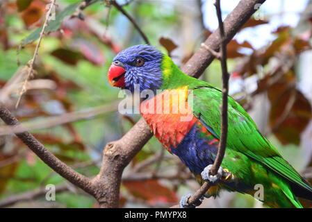 Pretty Parrot - Stock Photo