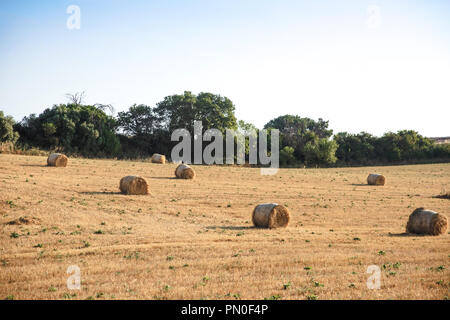 dry hay bales on agricultural field at provence, france - Stock Photo