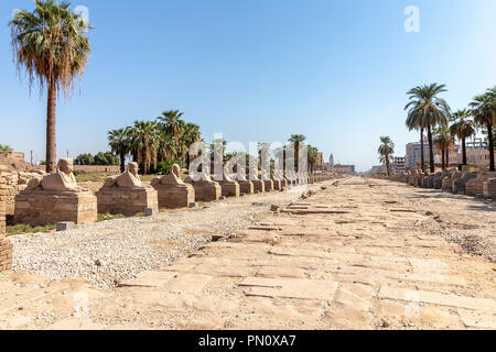 Sphinxes road at entrance to Luxor Temple, a large Ancient Egyptian temple complex located on the east bank of the Nile River in the city today known  - Stock Photo