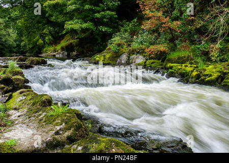 The River Teifi at Cenarth Falls, Cenarth, Ceredigion, Wales - Stock Photo
