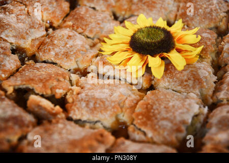 Cut up apple pie with a faux sunflower - Stock Photo