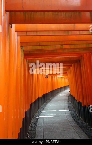 Path between red torii gates, with lantern, Fushimi Inari shrine, Kyoto, Japan. No PR