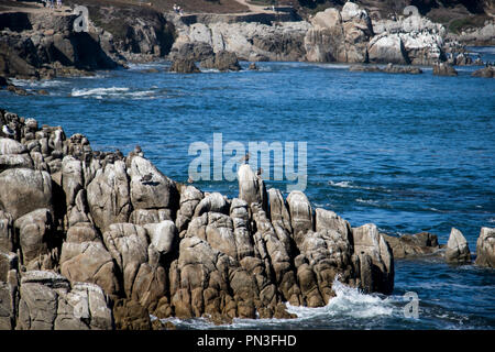 California Coast with rocks, seagulls and blue water. Idyllic serene shoreline view. Azure water. - Stock Photo