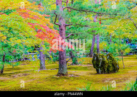 Red and green color changing of maple leaves in the mossy garden of Kinkaku-ji temple area, Kyoto Prefecture, Kansai region, Japan - Stock Photo