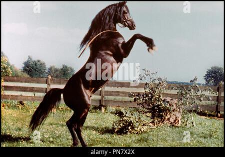Prod DB © Omni Zoetrope / DR L'ETALON NOIR (THE BLACK STALLION) de Carroll Ballard 1979 USA cheval, se cabrer,  d'apres le roman de Walter Farley - Stock Photo