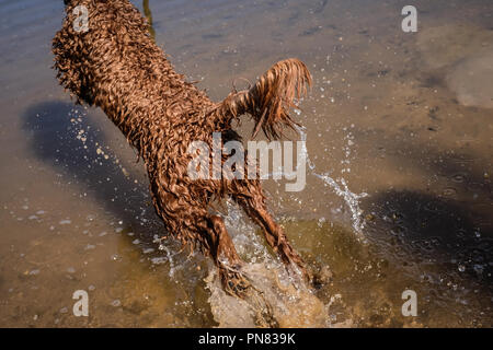 Dogs having fun and playing in a lake - Stock Photo