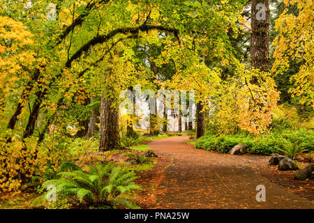 A path through autumn foliage forest in Silver Falls State Park, Oregon, USA - Stock Photo