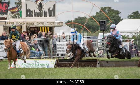 Cheshire Country Fair 2018 - Shetland Pony Racing - Stock Photo
