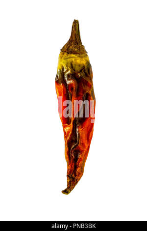 A dryed chilli on white background - Stock Photo