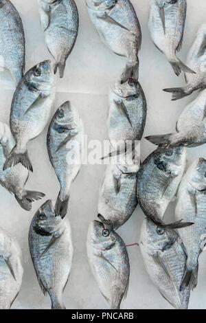 Fresh sea fish on ice at the italian market in Naples - Stock Photo