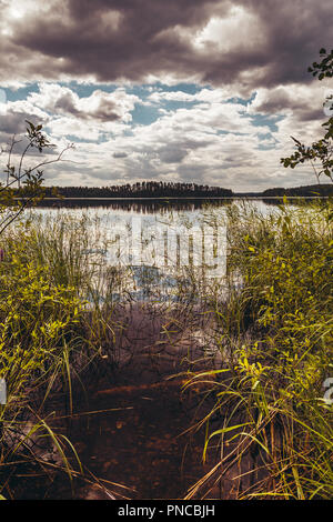 Reed beds in the water on a sunny day in Finland - Stock Photo