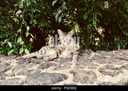Kitty relaxing in Hawaii