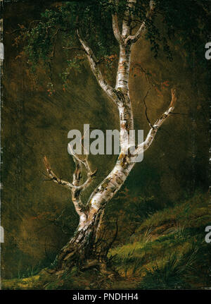 Study of a Birch Tree. Date/Period: 1826. Painting. Olje på lerret. Width: 40.5 cm. Height: 55 cm. Author: JOHAN CHRISTIAN DAHL. - Stock Photo