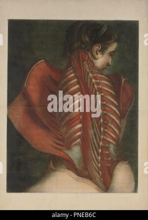 Muscles of the Back. Date/Period: 1746. Print. Color mezzotint Color mezzotint. Height: 608.58 mm (23.95 in); Width: 460.76 mm (18.14 in). Author: Jacques-Fabien Gautier-Dagoty. Jacques-Fabien Gautier Dagoty. - Stock Photo