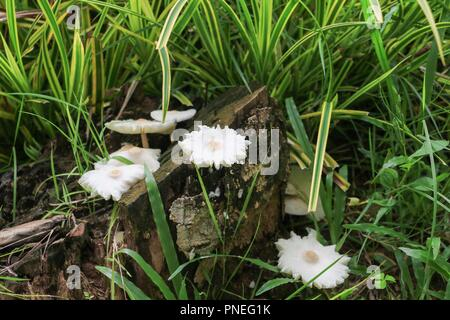 mushroom in nature beautiful on the floor grass,  select focus with shallow depth of field.