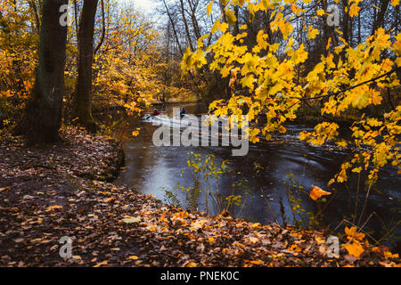 Couple paddling in kayak on forest river. Autumn forest lake surrounded by golden limbs and leaves in the autumn day - Stock Photo