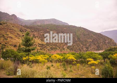 Autumn,approaching,Paro valley,tree leves,turning ,yellow colour,Bhutan. - Stock Photo