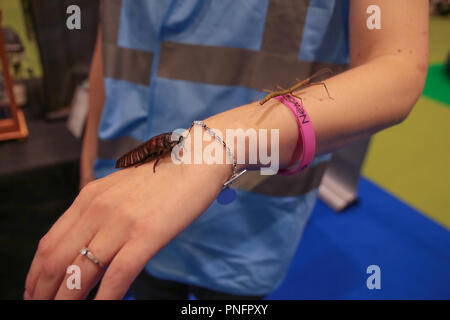 London, UK. 21 September 2018 New Scientist Live 2018 Insects are a big attraction  at the show in London, UK. Excel,fun day for the whole family@Paul Quezada-Neiman/Alamy Live News - Stock Photo