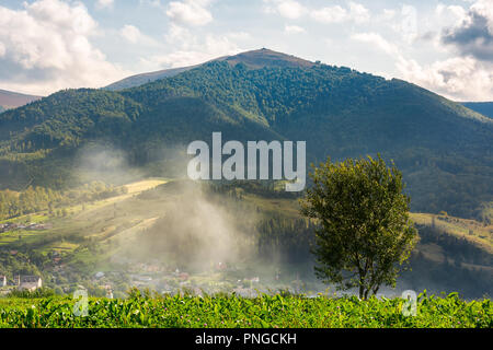 lonely tree on the meadow in smoke. Temnatyk mountain in the distance under the cloudy afternoon sky. beautiful landscape of mountainous Carpathian co - Stock Photo