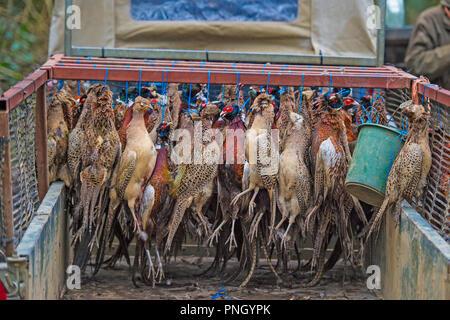shot pheasants on a game cart - Stock Photo