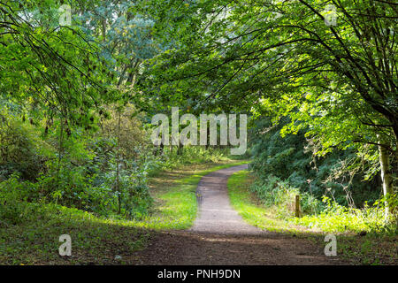 A canopy of trees hangs over a dirt path, weak sunlight shines through the trees and across the path. - Stock Photo