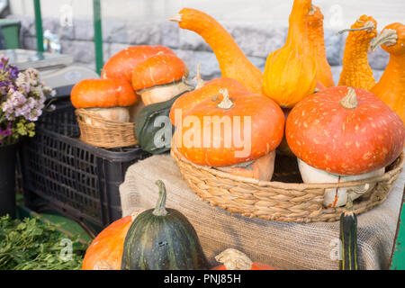 Different fresh and colorful vegetables on market in september - Stock Photo