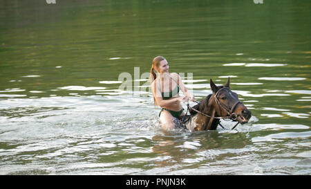 Brown horse portrait with river on the background - Stock Photo