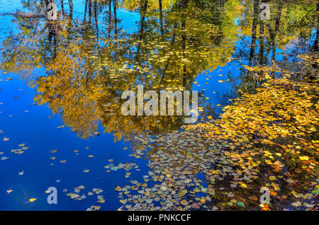 Picturesque autumn landscape - golden fallen leaves floating on the water surface of pond. In the water of lake reflected blue sky and yellow foliage  - Stock Photo